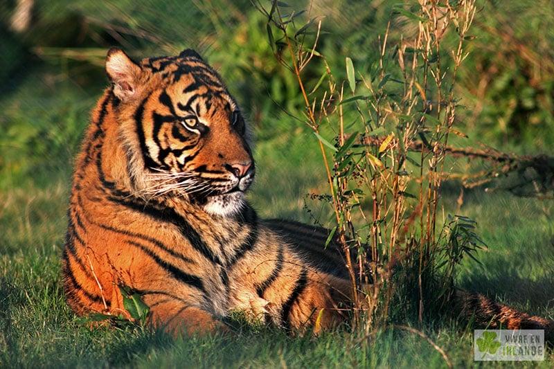Fota Wildlife Park Animalier Zoo De Cork