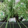 Les plantes aromatiques ne sont pas très exigeantes et elles poussent facilement en bac ou […]