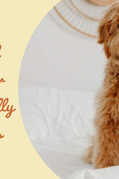 Tips and Tricks for Pet Friendly Holidays