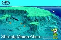 Shaab Marsa Alam 3a