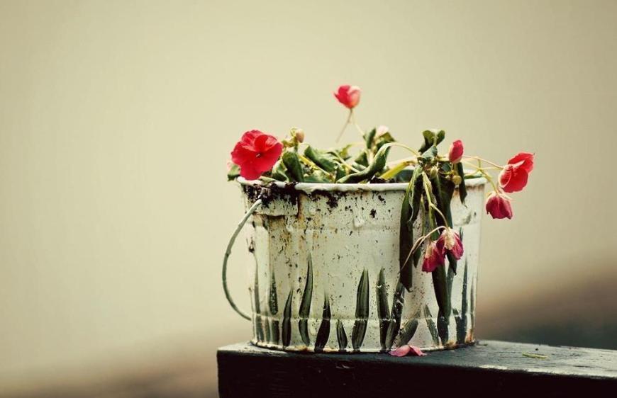 Тайна воскресения цветка