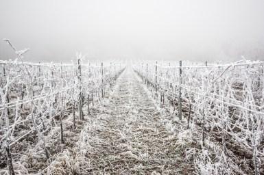 Zimní vinohrady