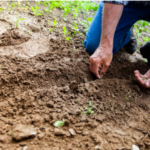 Simple Ways to Improve Soil Quality in Your Backyard Garden