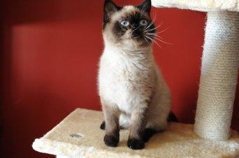 Lola van Bastet 1
