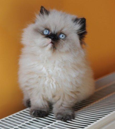 kittens Morticia 2
