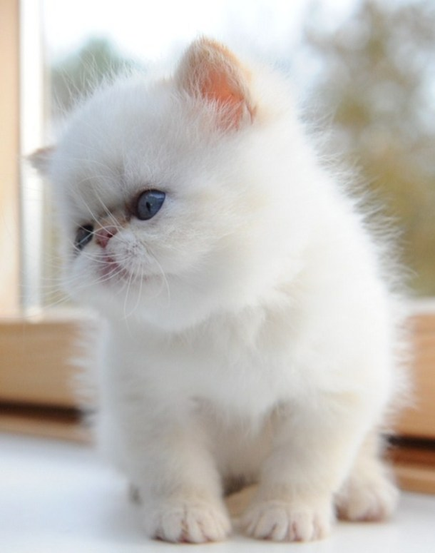 kittens Morticia x Pedro (10)