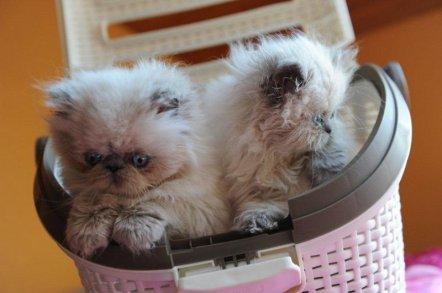 kittens Shanty 2