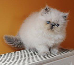 kittens Shanty 5