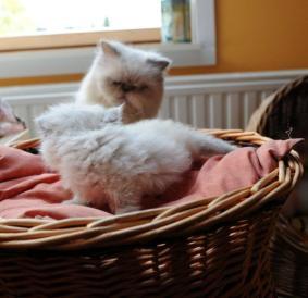 kittens Shanty 6