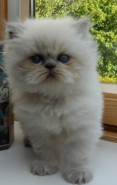 kittens Shanty x Pedro (18)