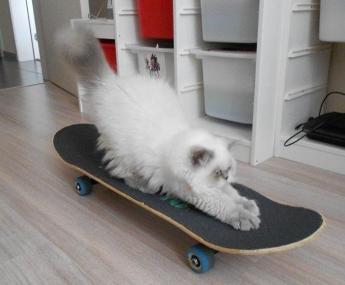 mika van 't vlokske skateboard