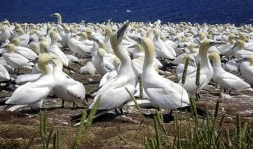 Resultado de imagen de fauna y el Cabo de Gata-Níjar