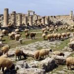 Cyrene ruinele orasului elen astazi
