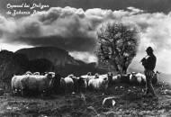 Copacul lui Dragan de Zaharia Bârsan