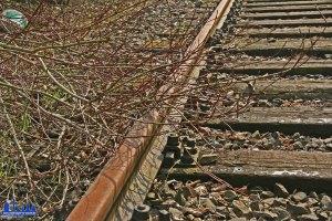 Verlassene Gleise auf der Warndtstrecke/Rosseltalstrecke (Foto: Hell)