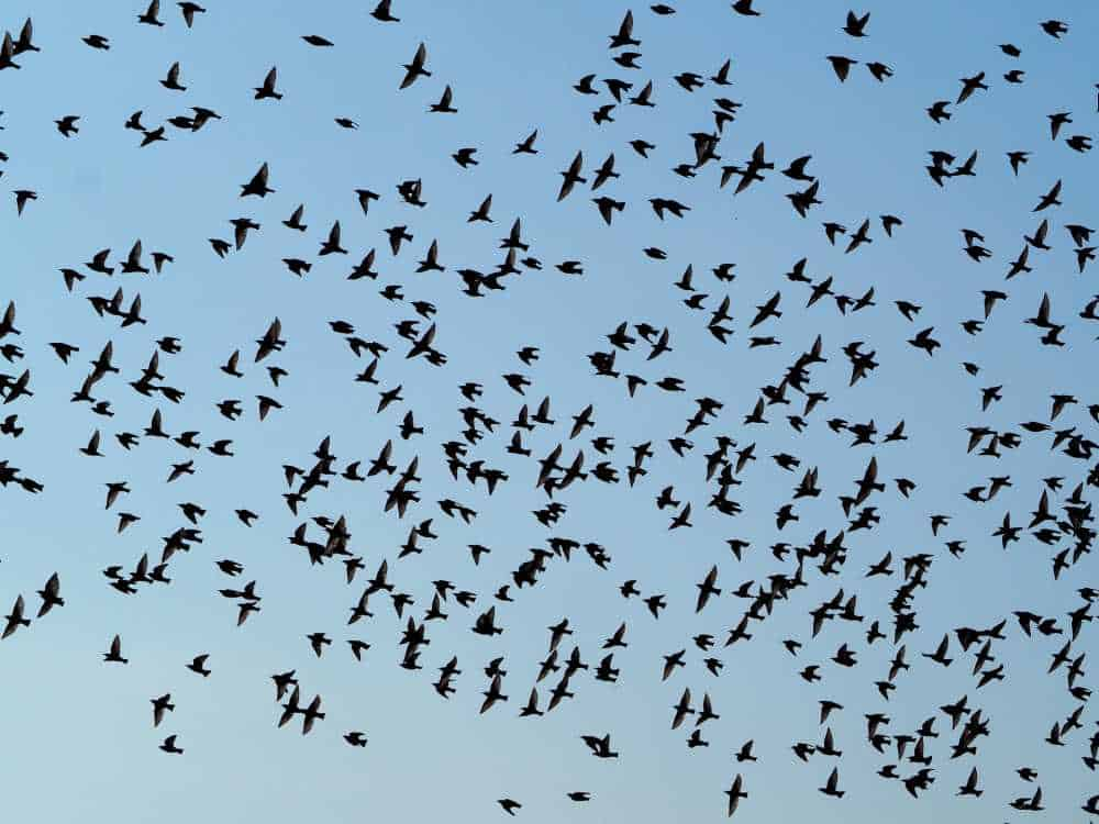 Vogelzug Zugvögel gut gestärkt ins Winterquartier