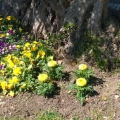 Good Deeds Day 2016 al Parco Ibernesi