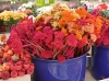 Herbstlicher Gartenmarkt Greiz-Schönfeld