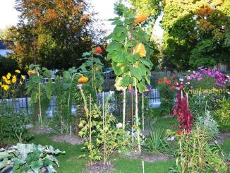 Auch in den Gärten steht der Frühjahrsputz an