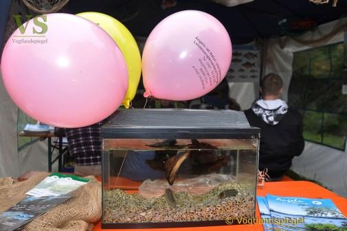 2. Fischerfest um den Greizer Parksee