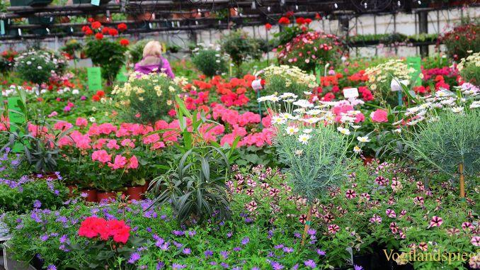 Gartenmarkt Schönfeld lud zum Tag der offenen Gärtnerei
