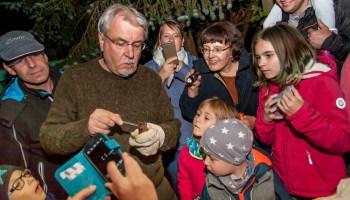 Kleine Kobolde der Nacht – Stunde der Fledermäuse
