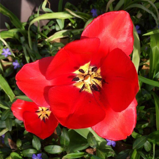Trinity. #tulip #voiceministries #voiceministriescamp