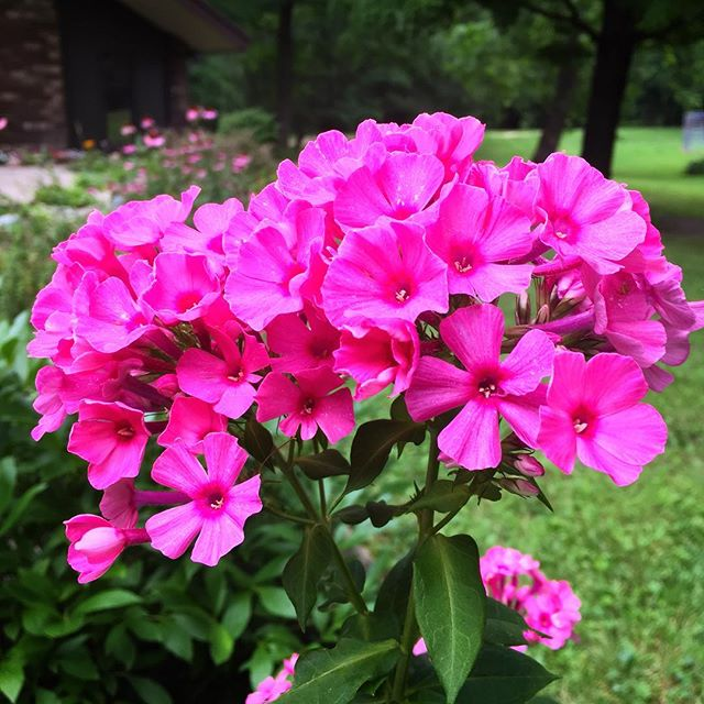 Pops of pink at the Camp! Anyone know what kind of flowers these are? #voiceministries #voiceministriescamp