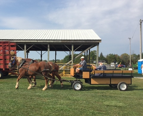 two large draft horses pulling a cart with three men riding on it