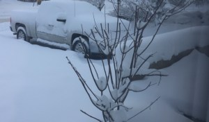 view from our front window shows a bare tree, the brick edge of our entryway and Derek's truck all under more than a foot of snow