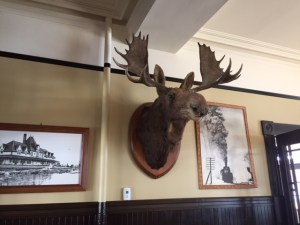 huge moose head on the wall with black and white framed photos of the station surrounding it