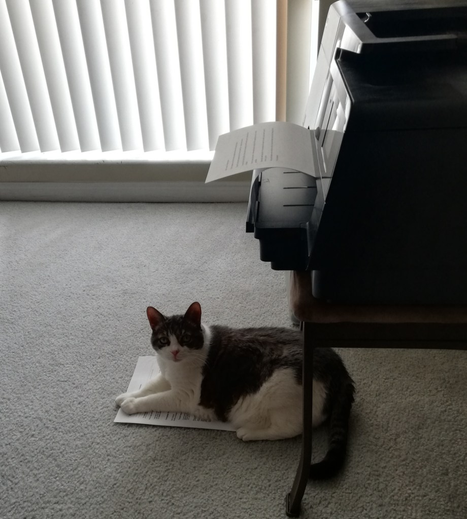 Miss Sugar lying on freshly printed papers on the floor below the printer.