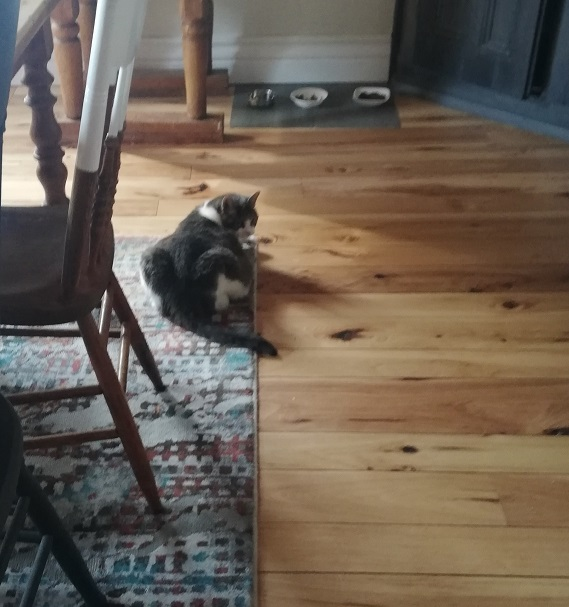 Sugar lying on the dining room rug with her food bowls about 3 feet ahead of her. She's looking back over her shoulder.