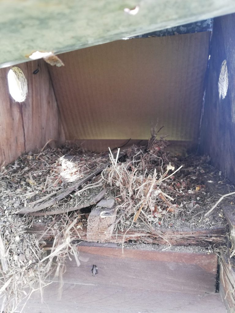 The inside of a birdhouse after the nest was removed. All sorts of debris, feathers and twigs remain.