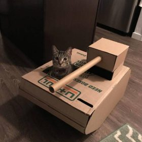 Cat peeking out of a tank made of cardboard.
