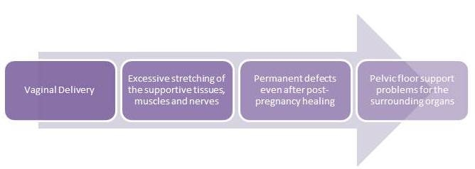 Pregnancy_Chart