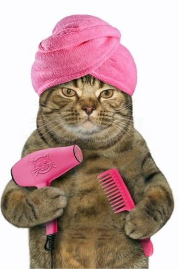save money on pet care | save money | money | pet care | pets | pet owner | savings | furry friends