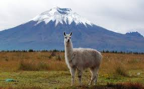 Cotopaxi, nearly 6km high. Is this a candidate for a future VEI7?