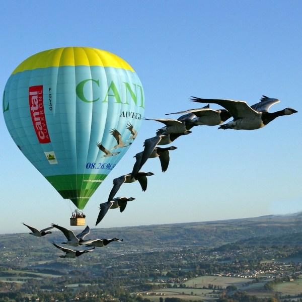 Vol montgolfière avec les oiseaux Auvergne