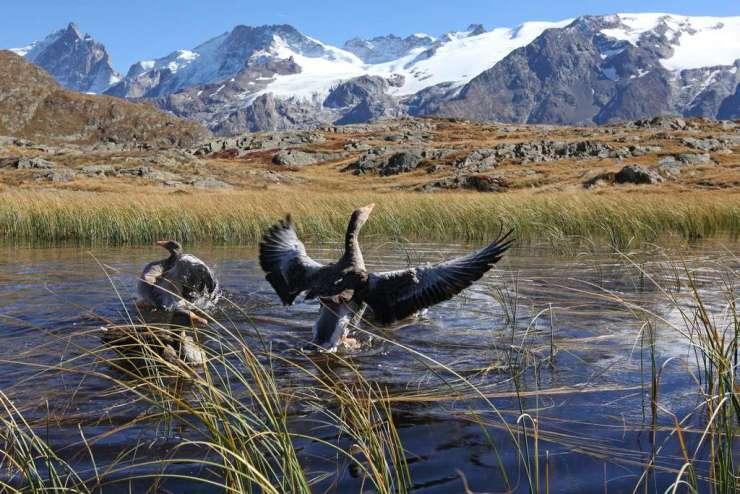 Vol avec les oiseaux Lac Annecy