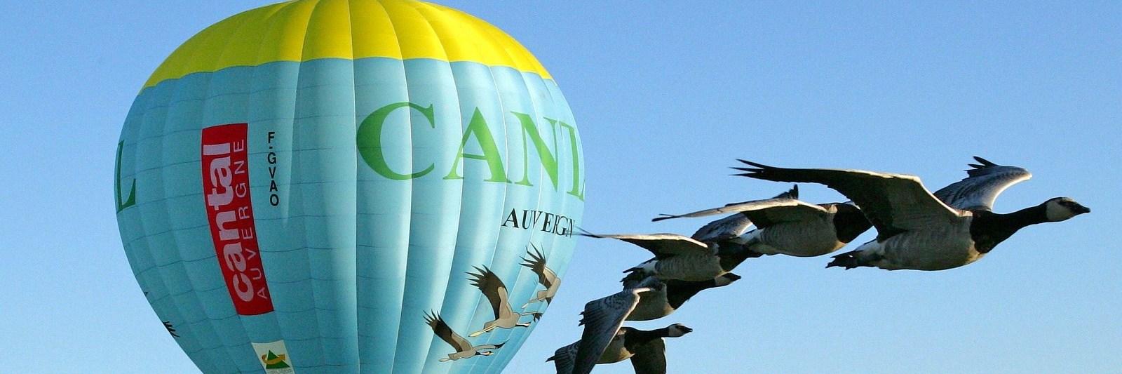 andeau-montgolfiere-oiseaux