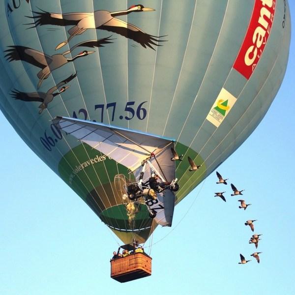 Vol en montgolfère avec les oies