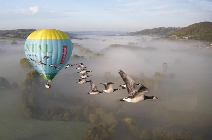 Mongolfière avec Oiseaux Cantal Auvergne