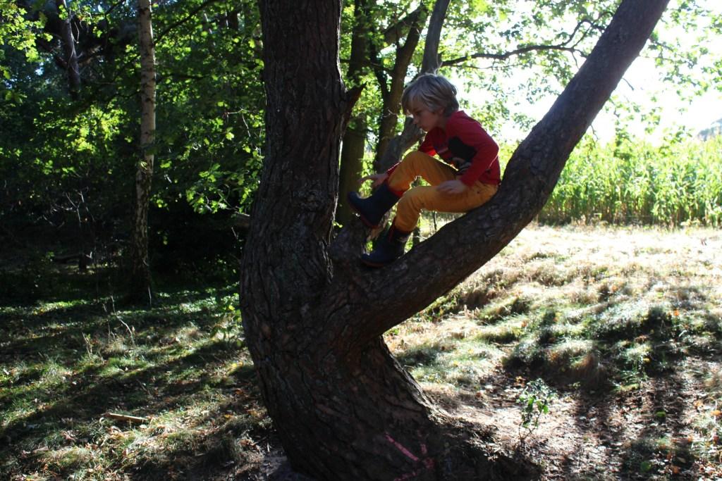 bos-hutten-bouwen-bomen-klimmen-outdoor-activiteiten-kinderen