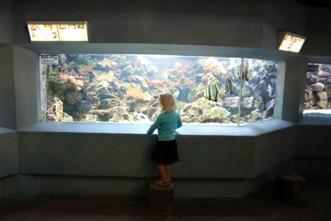 aquarium münster - allwetterzoo