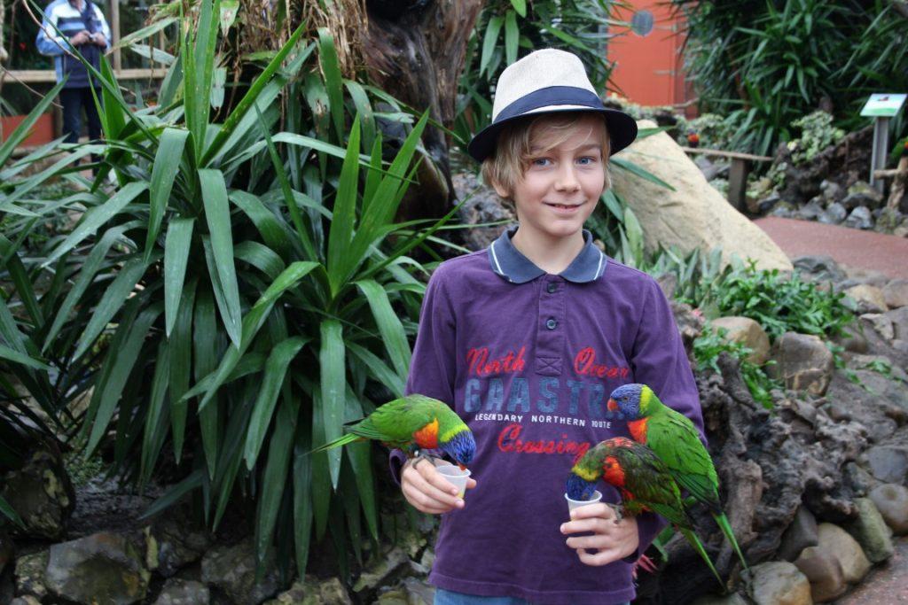 lori-vogels-papagaai-orchideeenhoeve