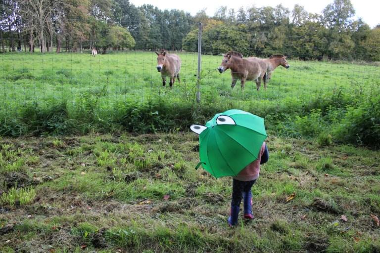 Natuurpark in Lelystad met kinderen - leuk budget uitje