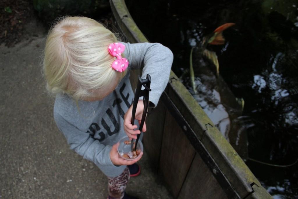 vissen-voeren-orchideeen-hoeve