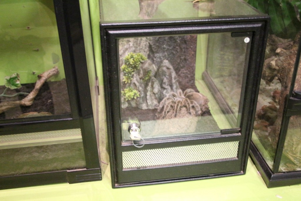 zoo-bizar-orvelte-drenthe