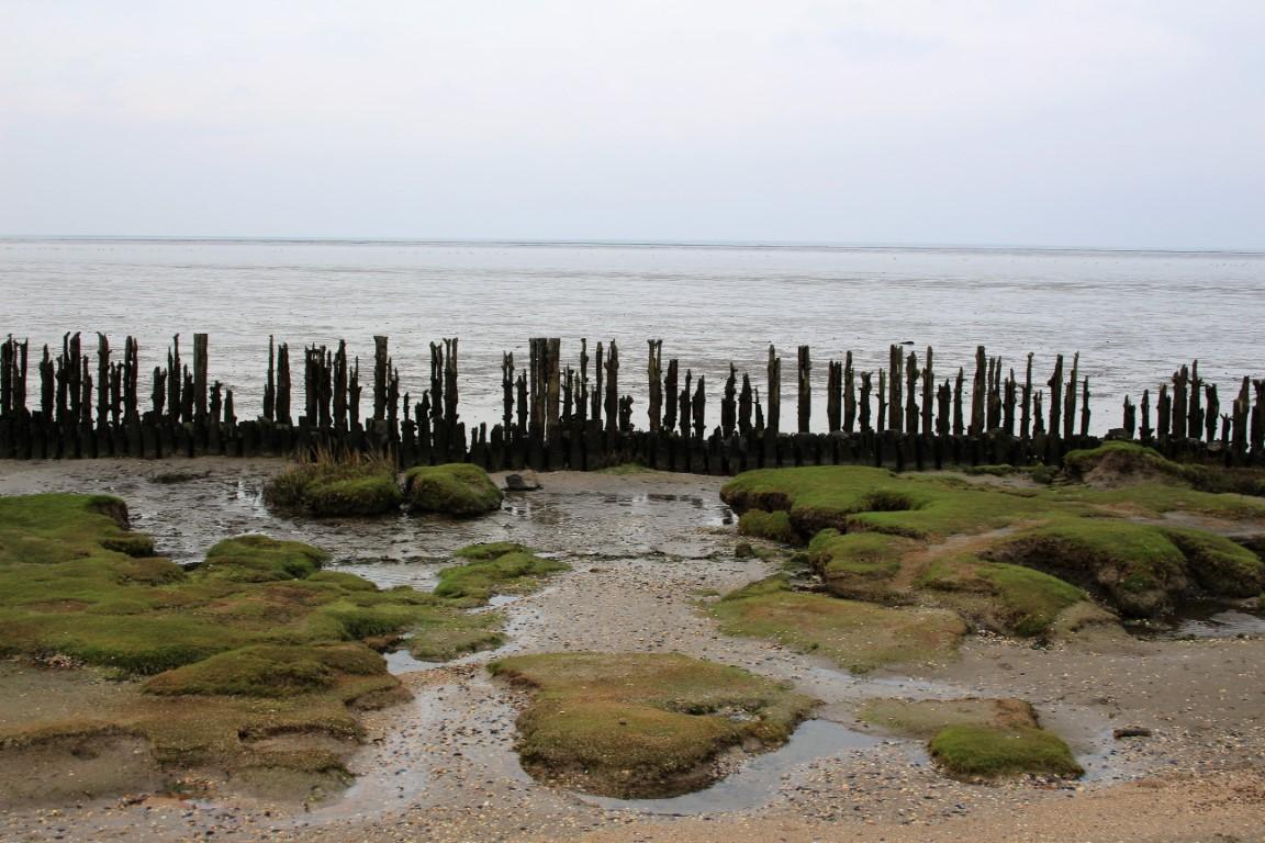 Moddergat Natuur Wadlopen Friesland
